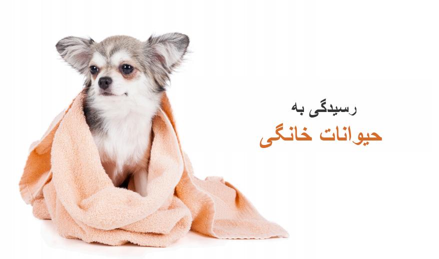 رسیدگی به حیوانات خانگی